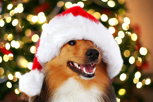 Book Your Holiday Appointments Soon! | Canine Corner