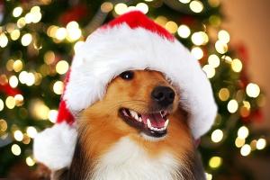 dog-christmas-gifts